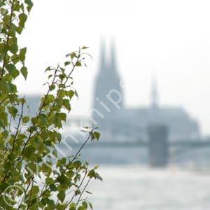 Blick über den Rhein von Köln Rodenkirchen in Richtung Innenstadt. Unscharf im Hintergrund der Kölner Dom und die Südbrücke.
